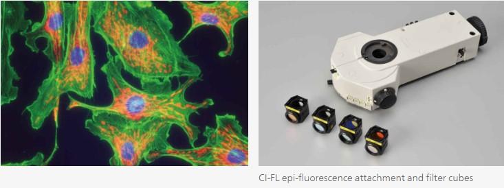 Nikon_Ci-E_Epi_fluorescence